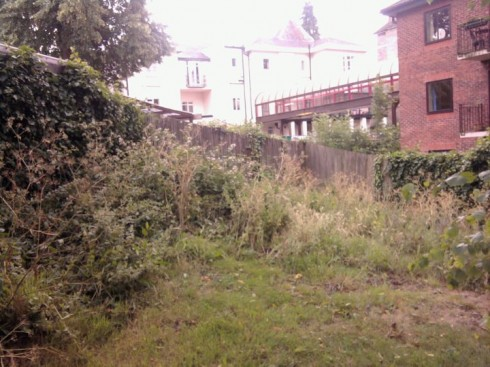 The site before the garden started, a riot of brambles ...