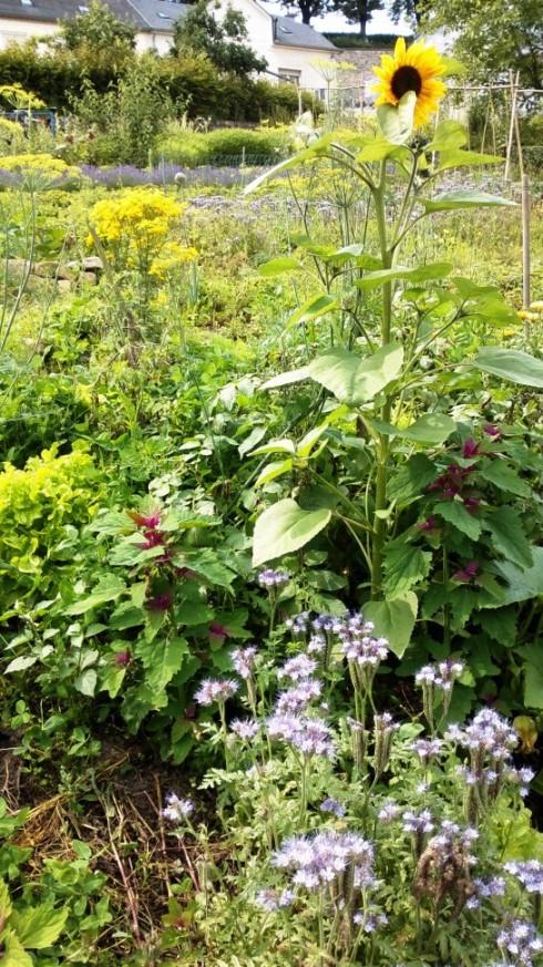 Luxembourg Community Garden