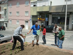 The 'Sunflower veg garden' in Portalegre takes shape.